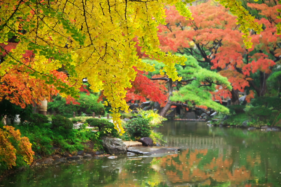 日比谷公園の紅葉2_a0263109_22230006.jpg