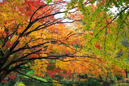 日比谷公園の紅葉2_a0263109_22230011.jpg