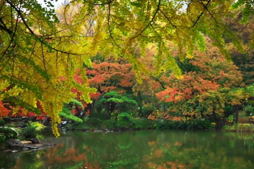 日比谷公園の紅葉2_a0263109_22230044.jpg