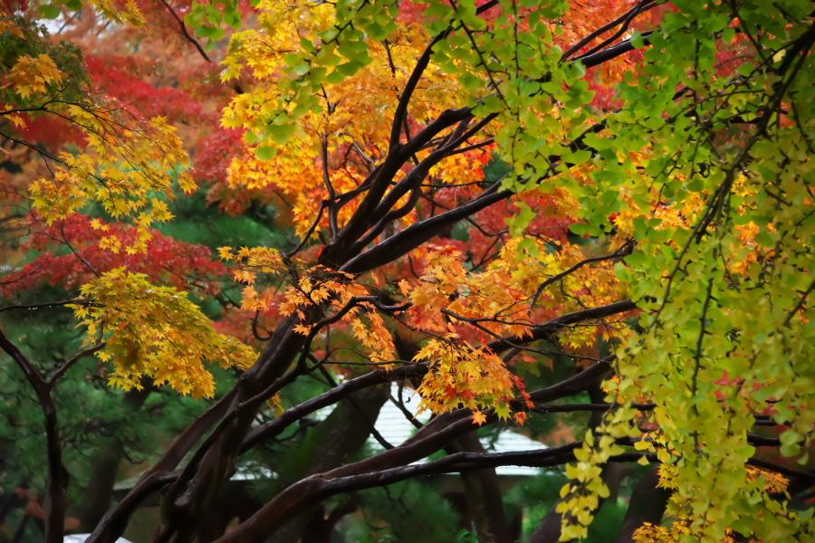 日比谷公園の紅葉2_a0263109_22230089.jpg