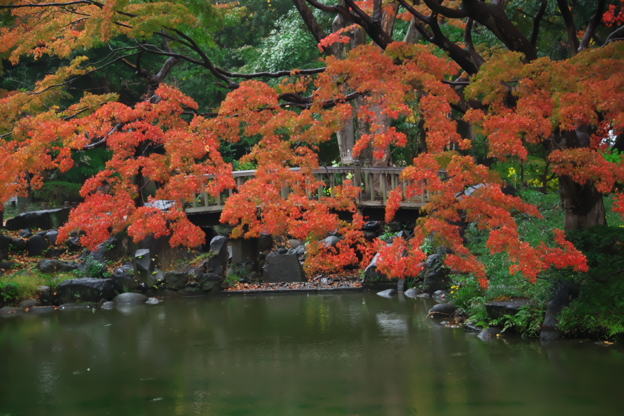 日比谷公園の紅葉2_a0263109_22230320.jpg