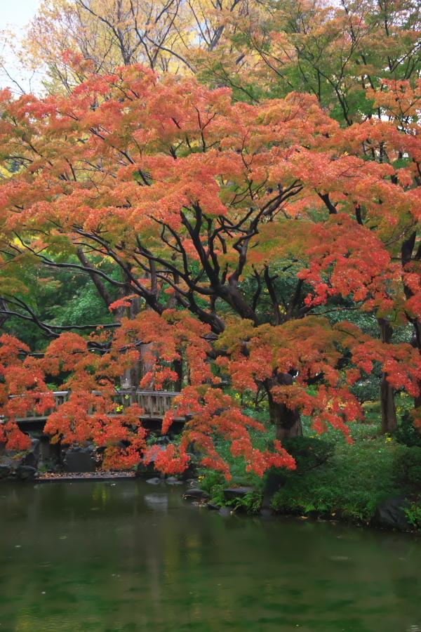 日比谷公園の紅葉2_a0263109_22230347.jpg