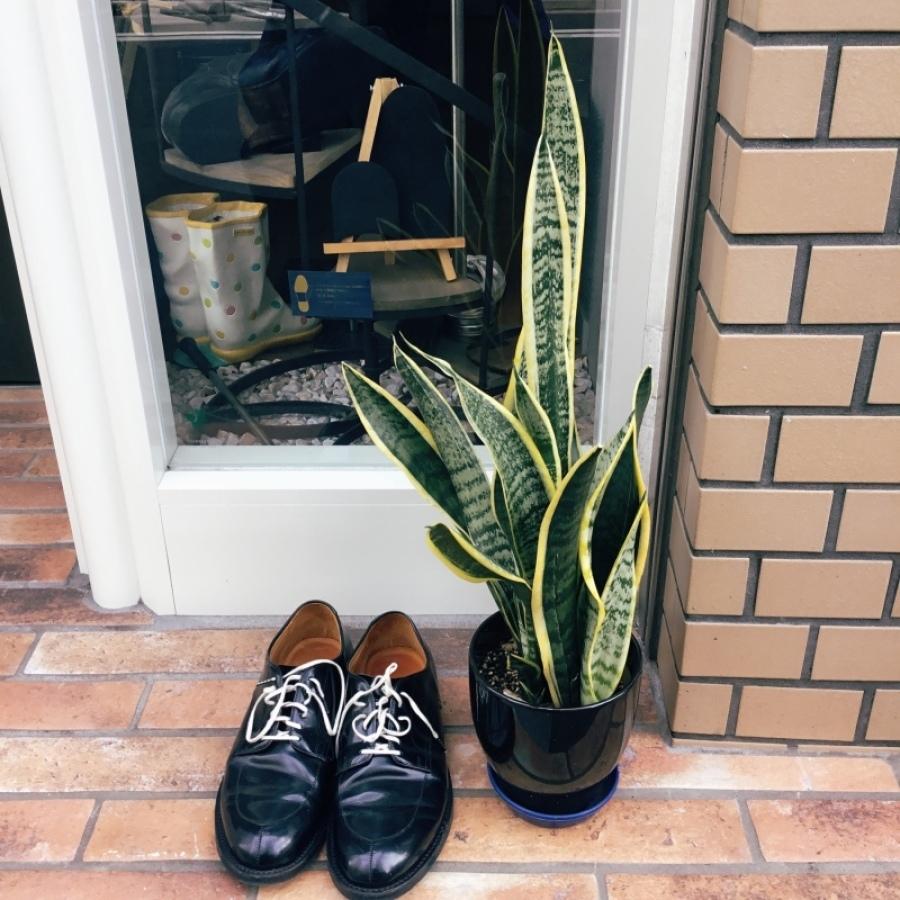 靴磨きすると、、、、やっぱり見違える_f0283816_14083450.jpeg