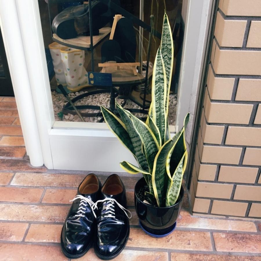 靴磨きすると、、、、やっぱり見違える_f0283816_14090585.jpeg