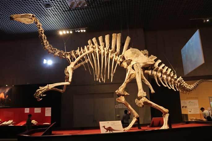 恐竜博2019~デイノケイルス【前編】_b0355317_11373897.jpg