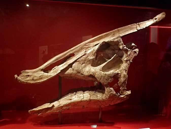 恐竜博2019~デイノケイルス【前編】_b0355317_12102110.jpg