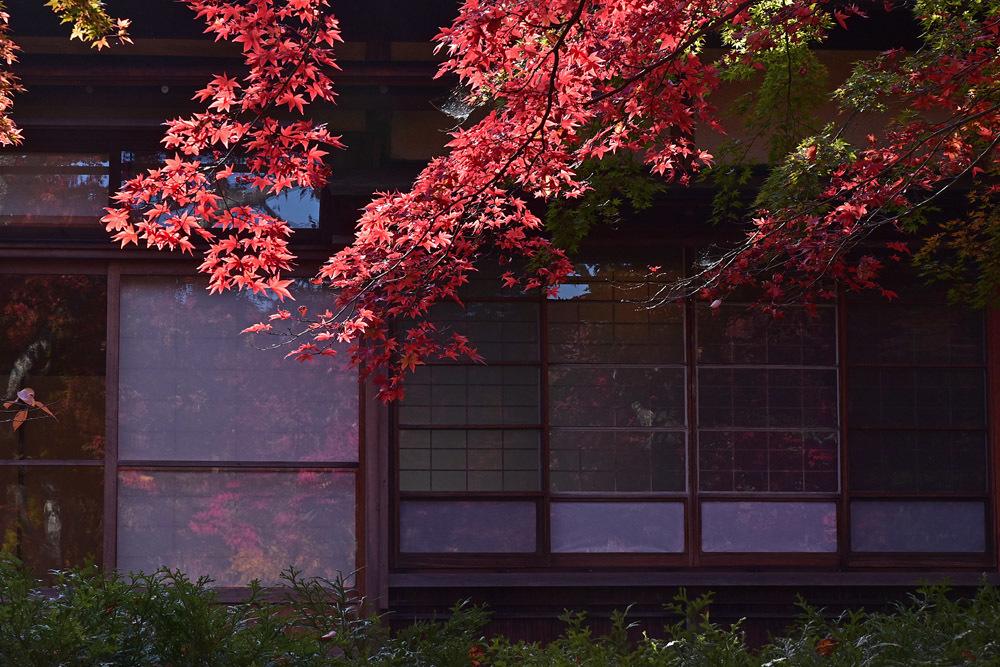 箱根美術館、前編_e0367330_17010169.jpg