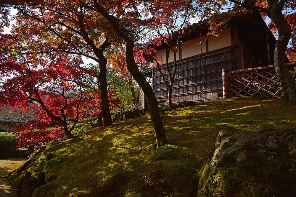 箱根美術館、前編_e0367330_17014304.jpg