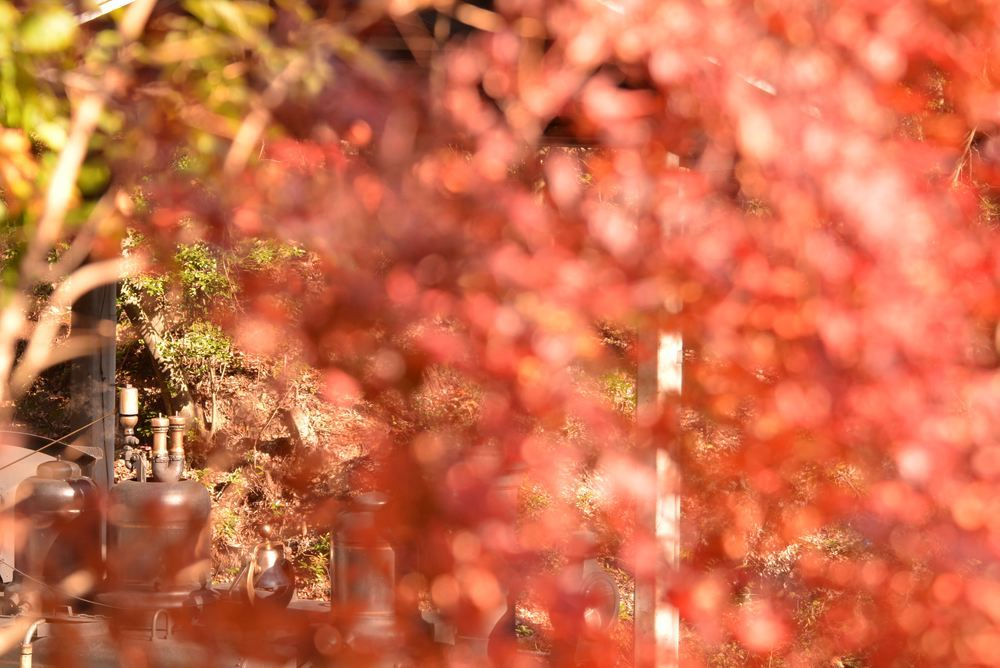 SL東京駅付近の紅葉と9号機関車_e0373930_21005461.jpg