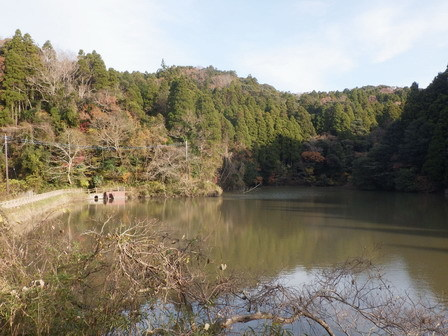 秋の実その後、冬の葉色_a0123836_17013303.jpg