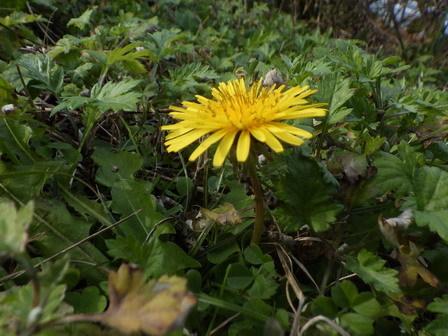 秋の実その後、冬の葉色_a0123836_17013507.jpg