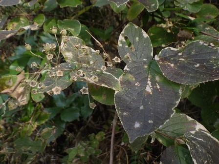 秋の実その後、冬の葉色_a0123836_17013594.jpg