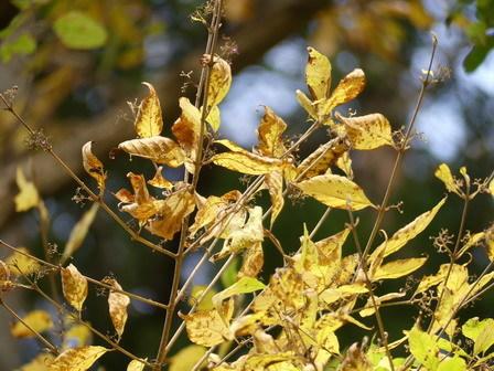 秋の実その後、冬の葉色_a0123836_17013635.jpg