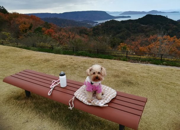 まったりセットを持って、今日も、まろたんとあじ竜王山公園へ。_b0149340_19010972.jpg