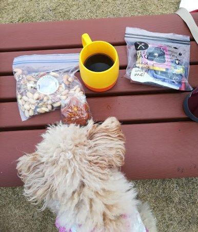まったりセットを持って、今日も、まろたんとあじ竜王山公園へ。_b0149340_19011921.jpg