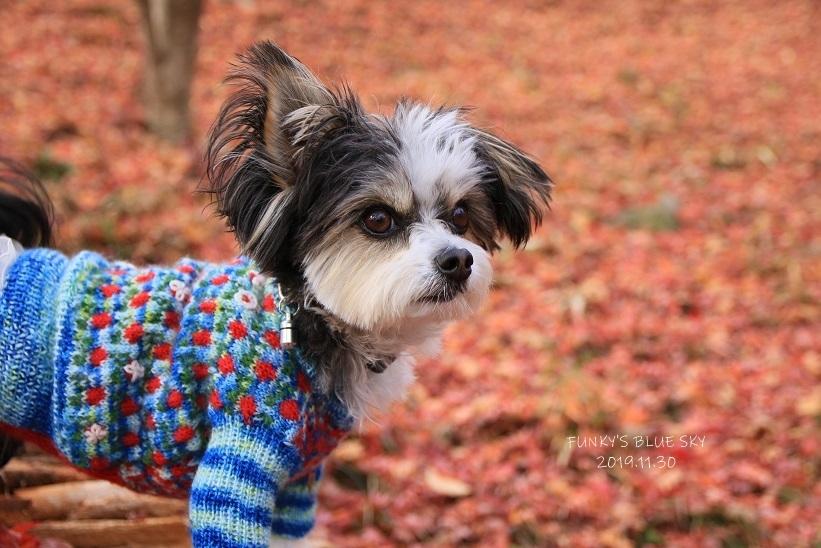 11枚目のセーター_c0145250_10591154.jpg