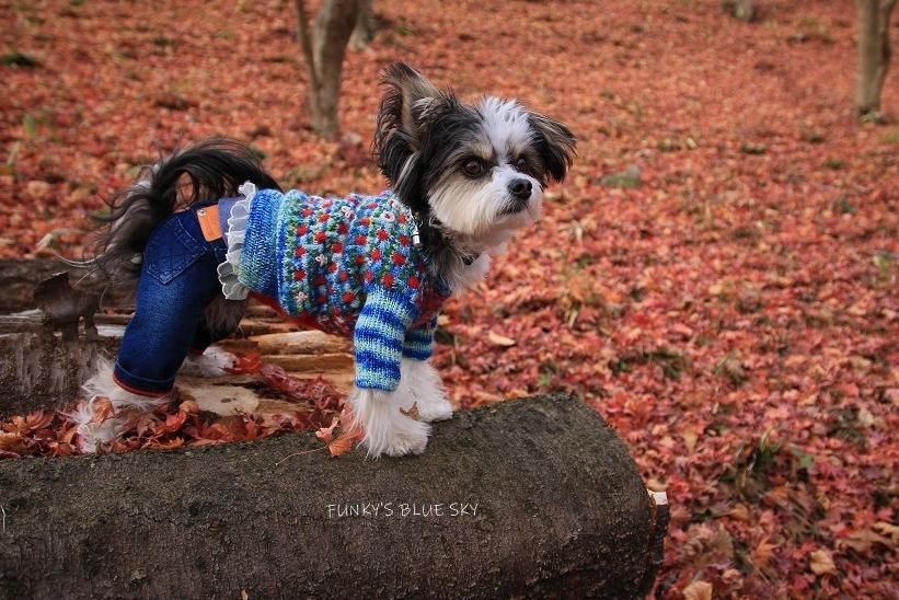 11枚目のセーター_c0145250_10591592.jpg