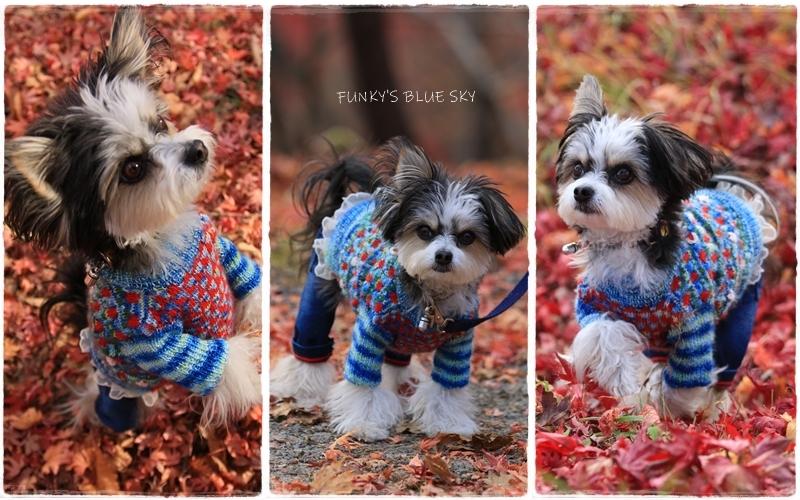 11枚目のセーター_c0145250_10591871.jpg