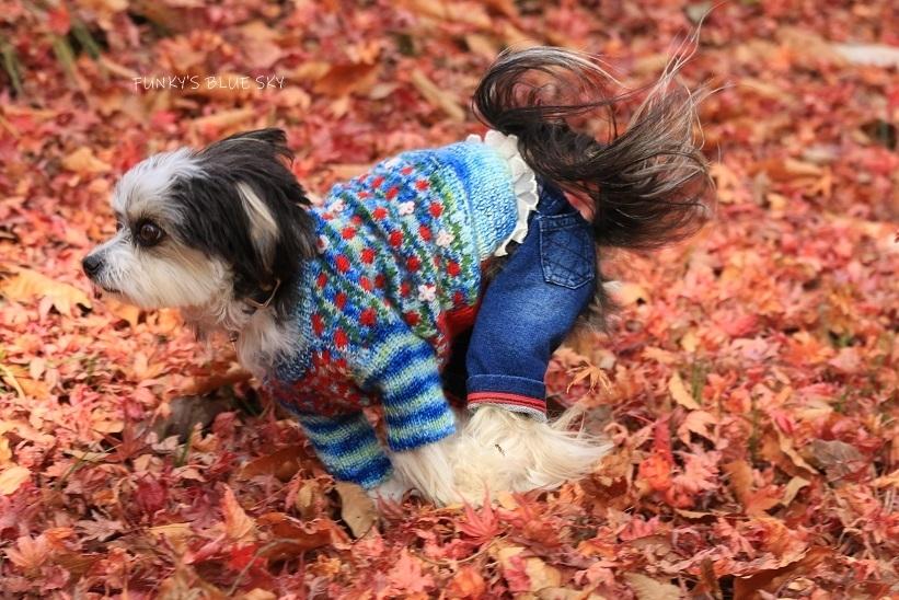11枚目のセーター_c0145250_10593872.jpg