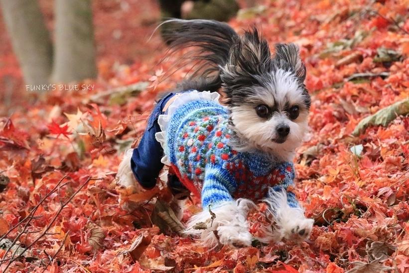 11枚目のセーター_c0145250_10595491.jpg