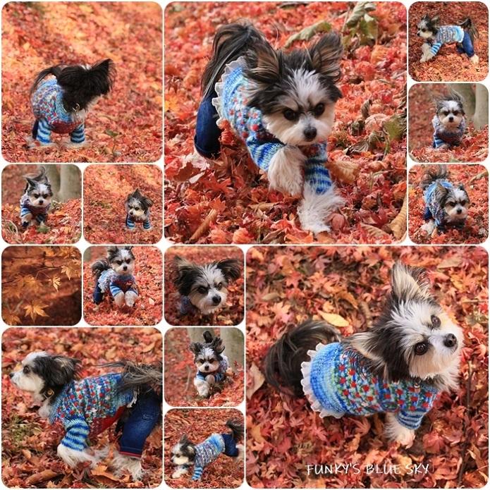 11枚目のセーター_c0145250_11002924.jpg
