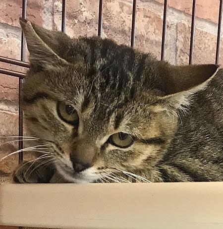 推定4ヶ月くらいの保護猫くん_e0362456_16365328.jpg