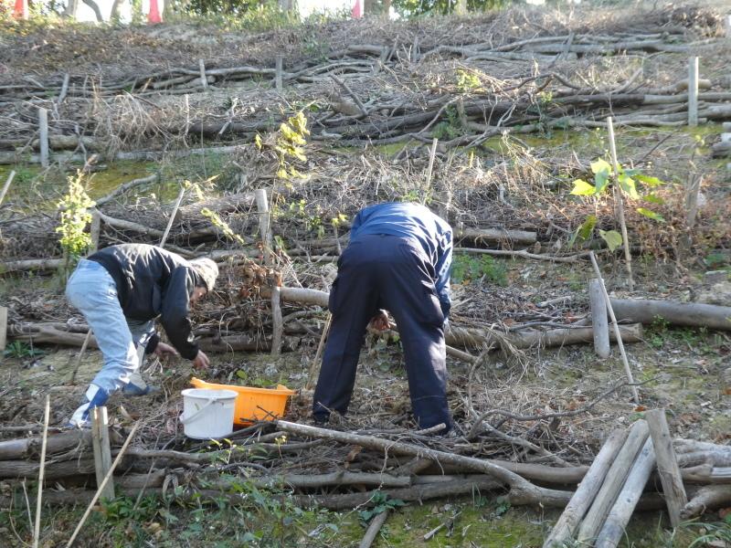 「みんなでワカメを育てよう!わかめ種付け」イベント準備手伝いと      草刈り・間伐材整理の定例活動・・・うみべの森_c0108460_17424456.jpg