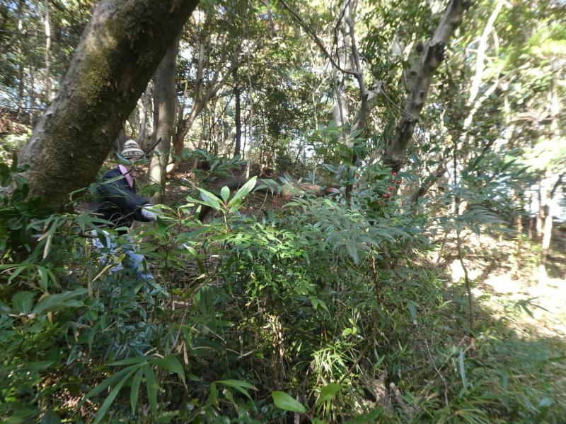 「みんなでワカメを育てよう!わかめ種付け」イベント準備手伝いと      草刈り・間伐材整理の定例活動・・・うみべの森_c0108460_17441382.jpg