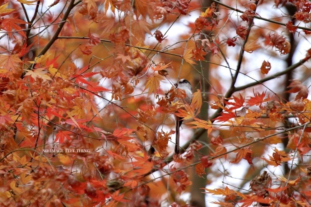 紅葉黄葉そしてエナガ♪_d0367763_18393076.jpg
