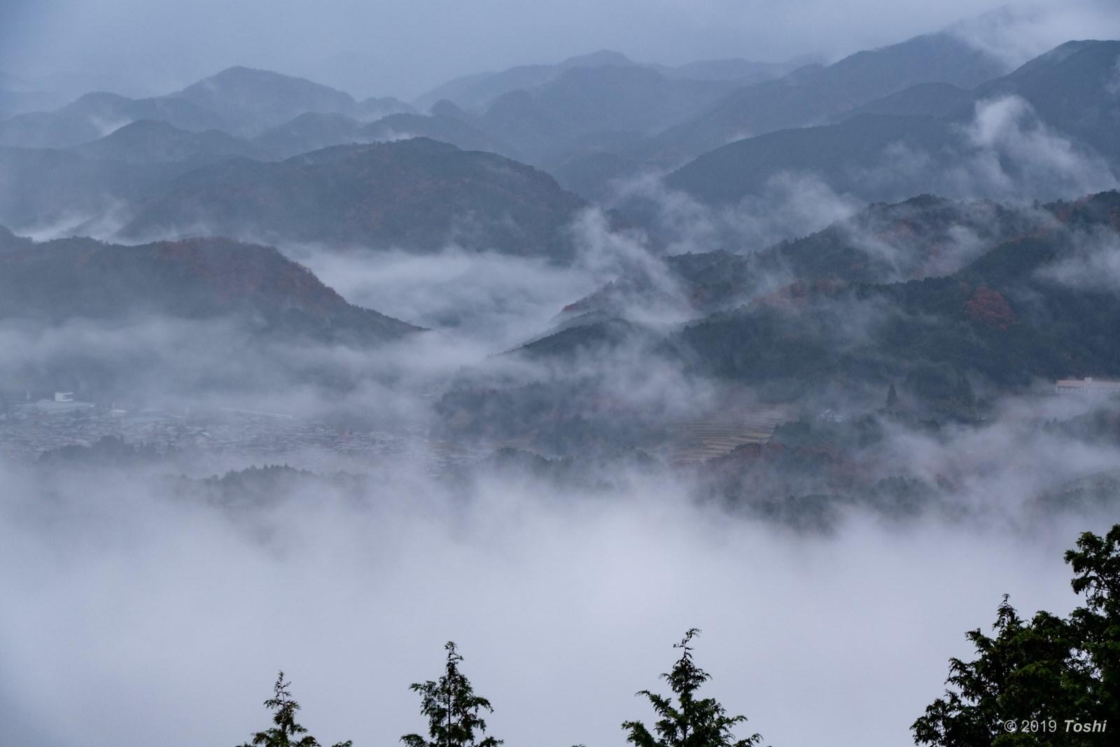 雨の鳥見山 1_c0350572_17271016.jpg