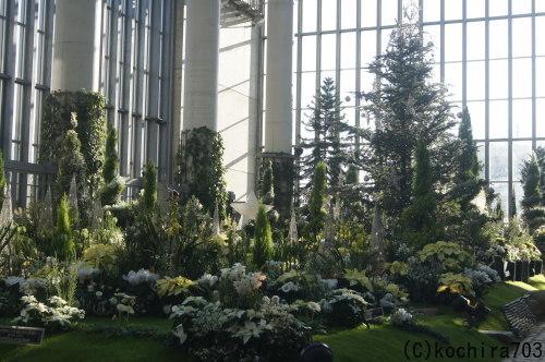 ホワイトクリスマス~奇跡の星の植物館_e0181373_20141149.jpg