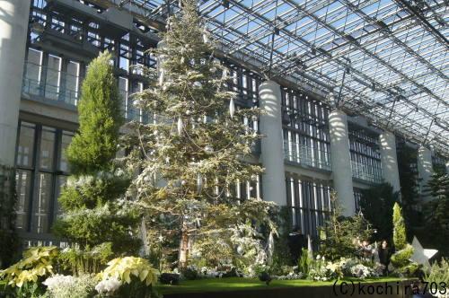ホワイトクリスマス~奇跡の星の植物館_e0181373_20142885.jpg