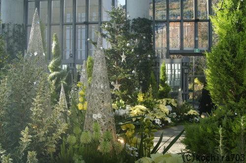 ホワイトクリスマス~奇跡の星の植物館_e0181373_20144988.jpg