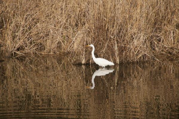 自然学習講座「野鳥がよろこぶ環境を知ろう」を行いました。_d0121678_17190561.jpg