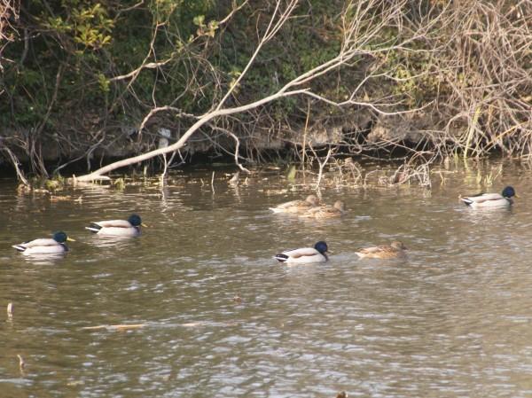 自然学習講座「野鳥がよろこぶ環境を知ろう」を行いました。_d0121678_18113329.jpg
