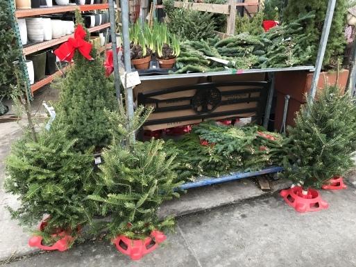 クリスマスの準備_b0159780_12155651.jpeg