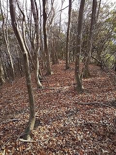 奥美濃鍋倉山から飯盛山周遊_e0064783_20555502.jpg