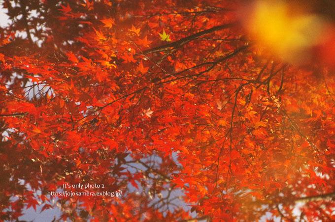 水面の紅葉*Ⅱ_b0391986_16460675.jpg