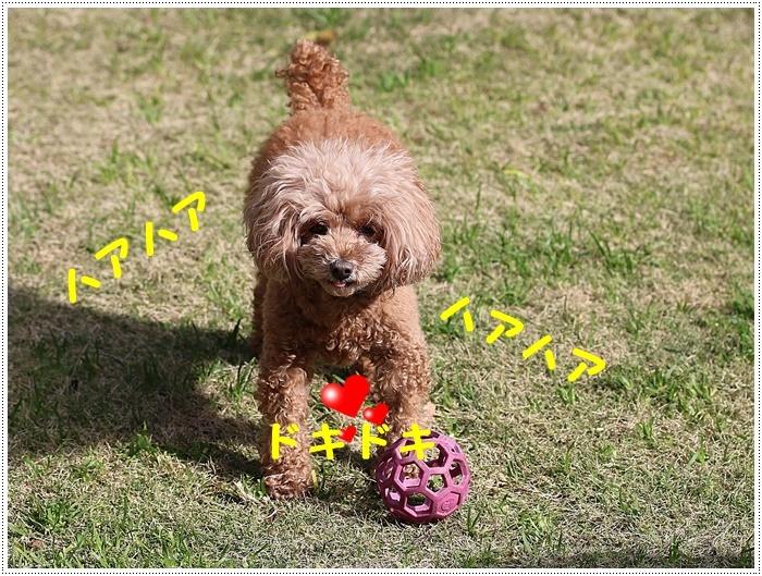 庭で遊ぶさくらと大の写真は、連写連写で枚数撮りすぎ。。。そんな時はアニメで片づけます(*⌒∇⌒*)テヘ♪_b0175688_20132160.jpg