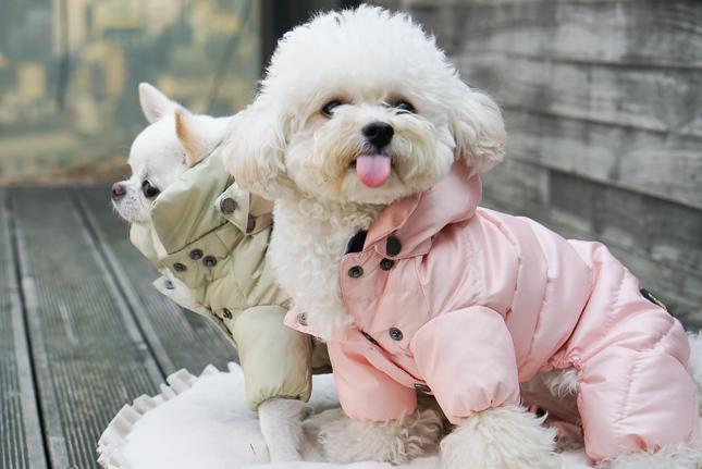 ☆ Louis dog ・ New Winter Wear ☆_d0060413_14222680.jpg