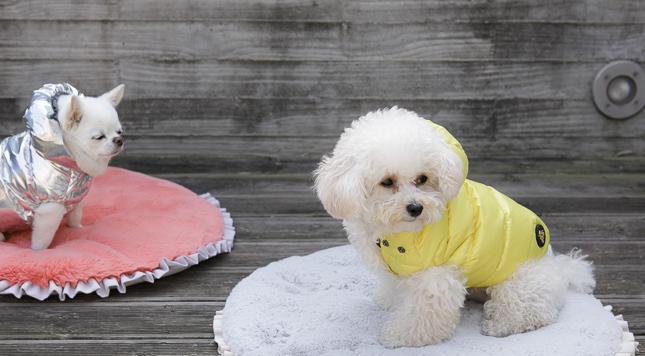 ☆ Louis dog ・ New Winter Wear ☆_d0060413_14223410.jpg