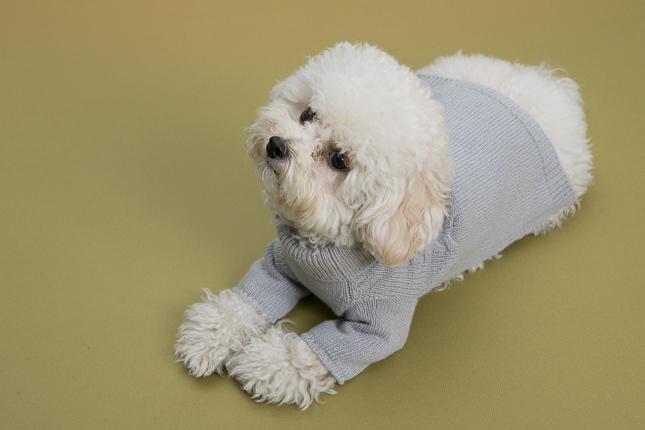 ☆ Louis dog ・ New Winter Wear ☆_d0060413_14224438.jpg