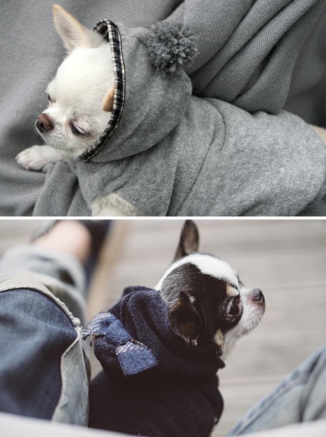 ☆ Louis dog ・ New Winter Wear ☆_d0060413_14225569.jpg