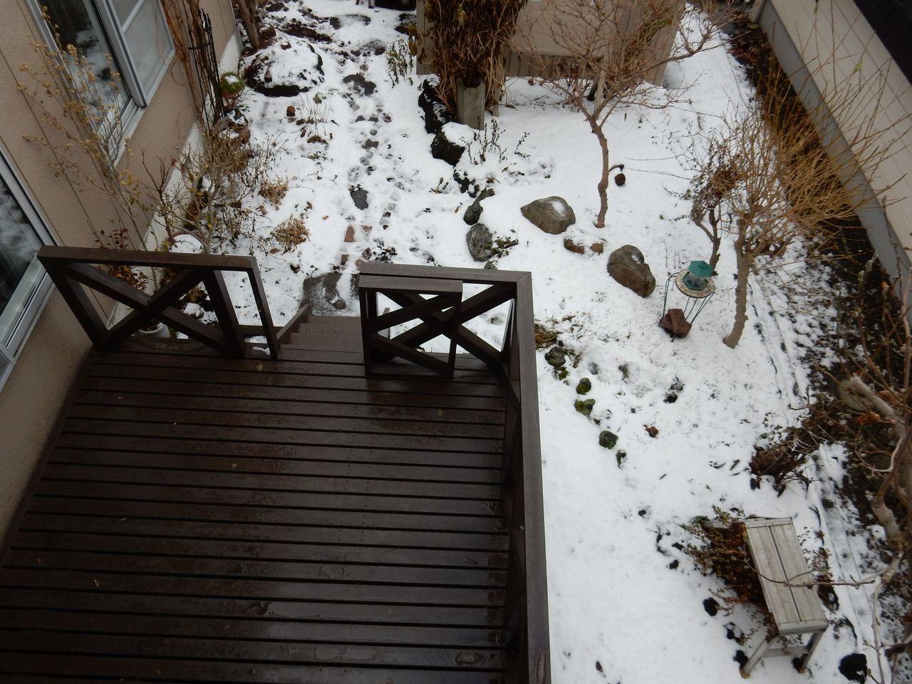 10年ぶりに雪のない12月半ば_c0025115_22424871.jpg