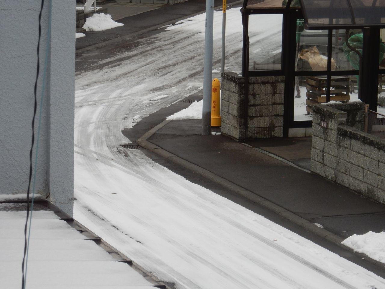 10年ぶりに雪のない12月半ば_c0025115_22483519.jpg