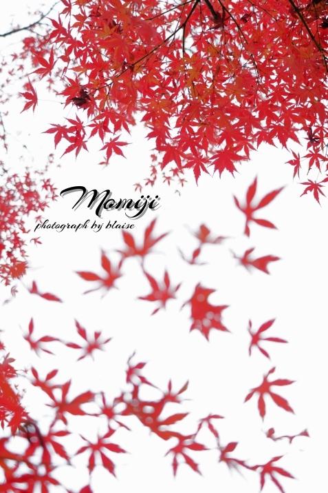 Momiji_d0165225_21421617.jpg