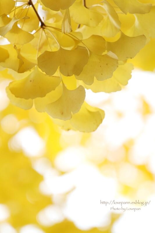 銀杏のある風景 in Tokyo_c0136926_07260377.jpeg