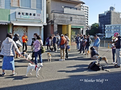 第26回マザーウルフ遠足 江ノ島レポート_e0191026_15495382.jpg