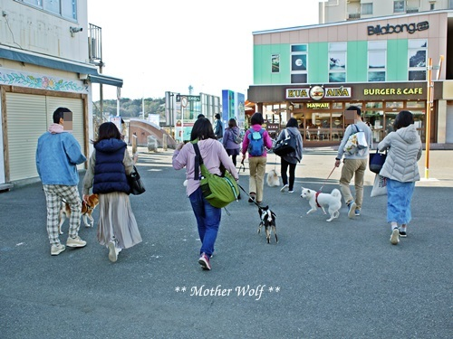 第26回マザーウルフ遠足 江ノ島レポート_e0191026_16085746.jpg