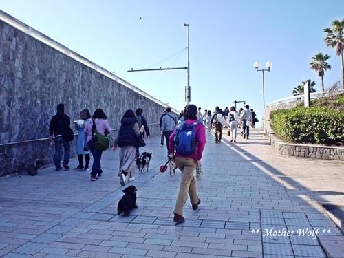第26回マザーウルフ遠足 江ノ島レポート_e0191026_17495580.jpg